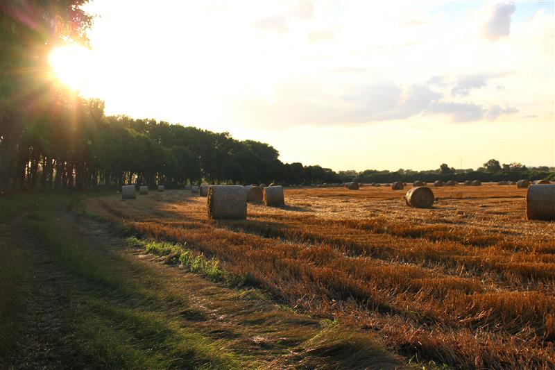 Haystacks on a mown field at sunset