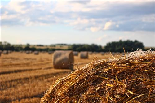 Mown field with close up haystack