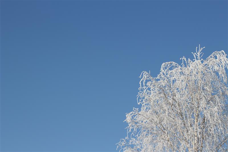 Blue sky and snowy tree