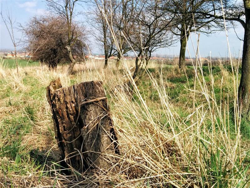 Stump with dry grass