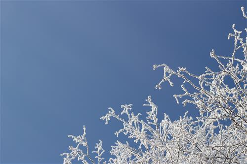 Snowy tree branches and blue sky