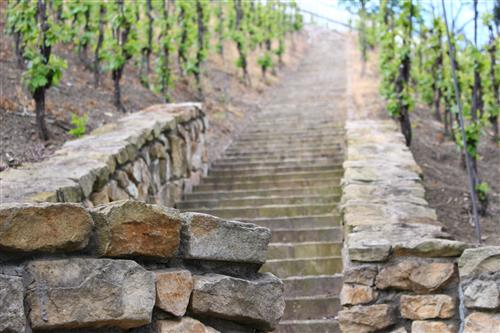 Stone wall and stairs in the vineyard